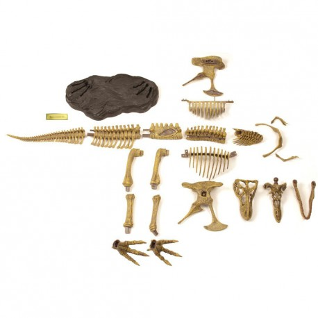Esqueleto Fosil T-Rex Geoworld