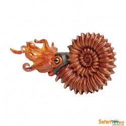 Ammonite Safari