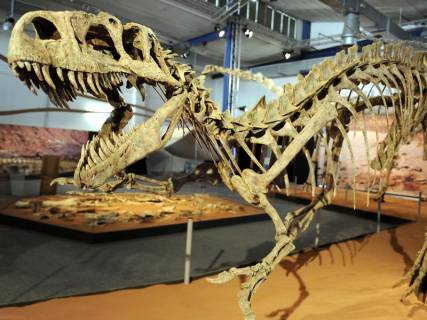 Escleto de tiranosaurus rex