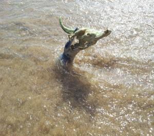 kronosaurus ataque