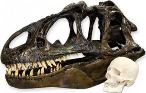 allosaurus craneo