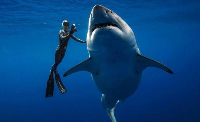 tiburon gigante megalodon